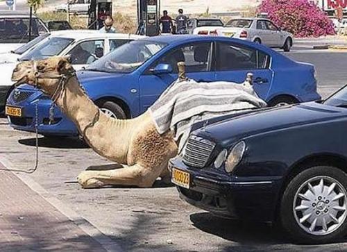 Zaparkował