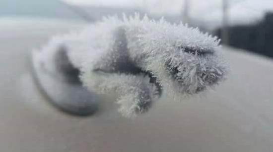 Teraz to już puma śnieżna