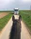 Przewaga koni...