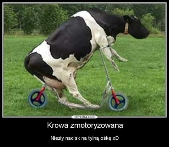 Skoro konie są mechaniczne, to krowie nie wolno?